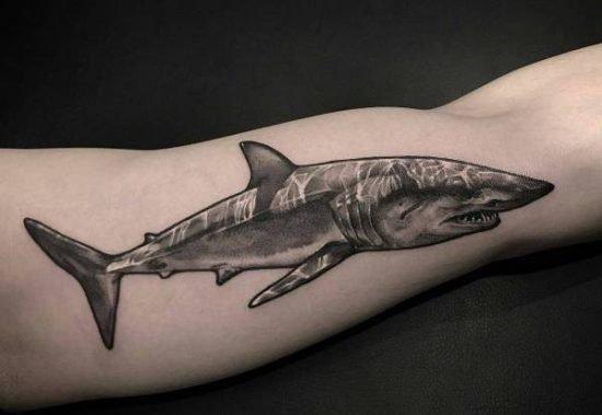 Haj-tatuering: Betydelse, design, historia och foton